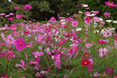 botanical-garden-35