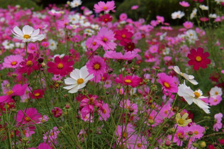 botanical-garden-36