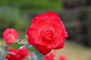 botanical-garden-37