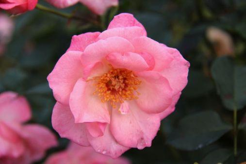 botanical-garden-38