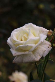 botanical-garden-40