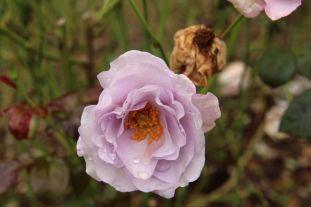 botanical-garden-41
