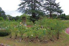 botanical-garden-42
