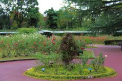 botanical-garden-43