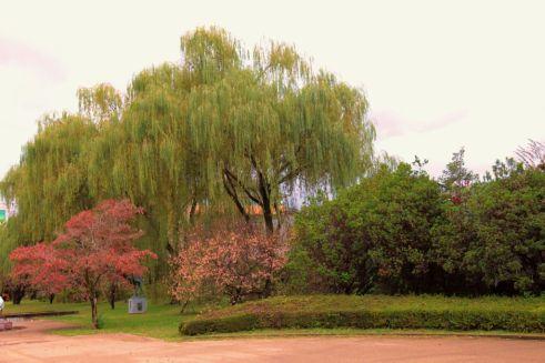 botanical-garden-44