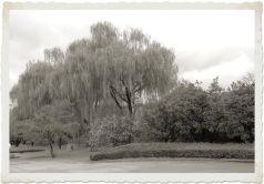 botanical-garden-45