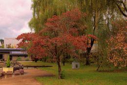 botanical-garden-46