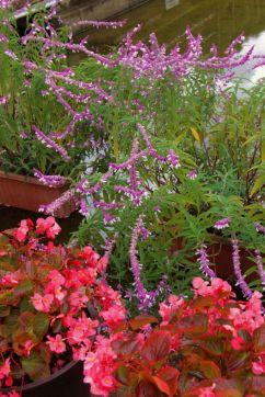 botanical-garden-48