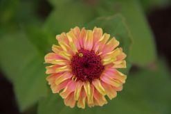 botanical-garden-50