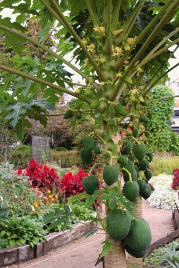 botanical-garden-52