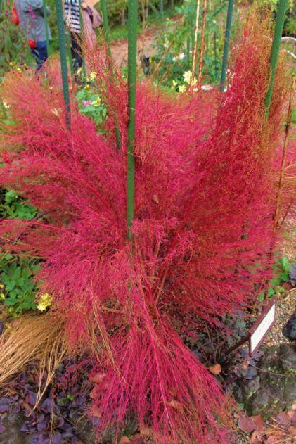botanical-garden-55