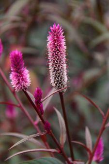 botanical-garden-56