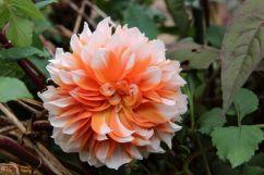 botanical-garden-58