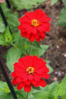 botanical-garden-59