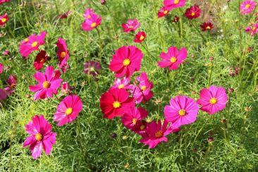 botanical-garden-6
