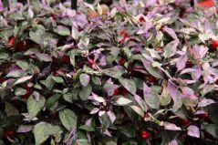 botanical-garden-60