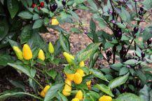 botanical-garden-62