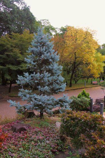 botanical-garden-65