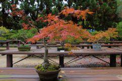 botanical-garden-68