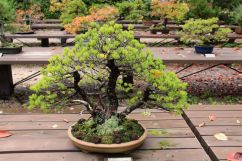 botanical-garden-69