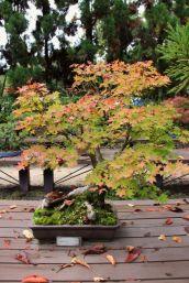 botanical-garden-70