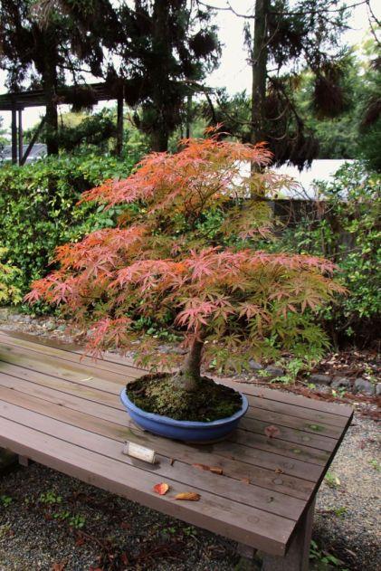 botanical-garden-71