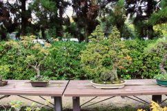 botanical-garden-72