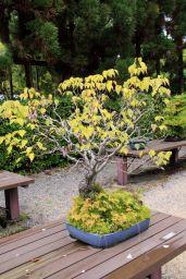botanical-garden-73