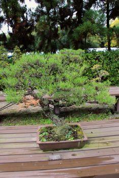 botanical-garden-74