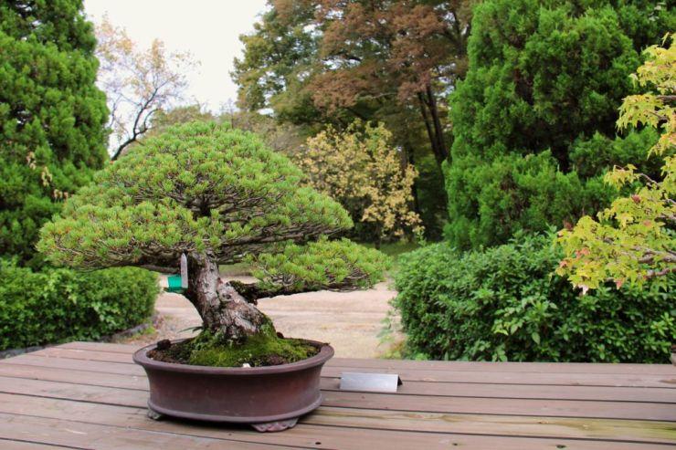 botanical-garden-75
