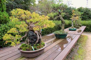 botanical-garden-76
