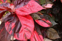 botanical-garden-85