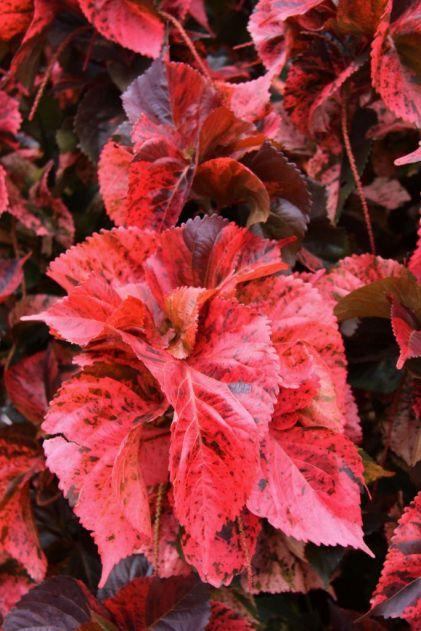 botanical-garden-86