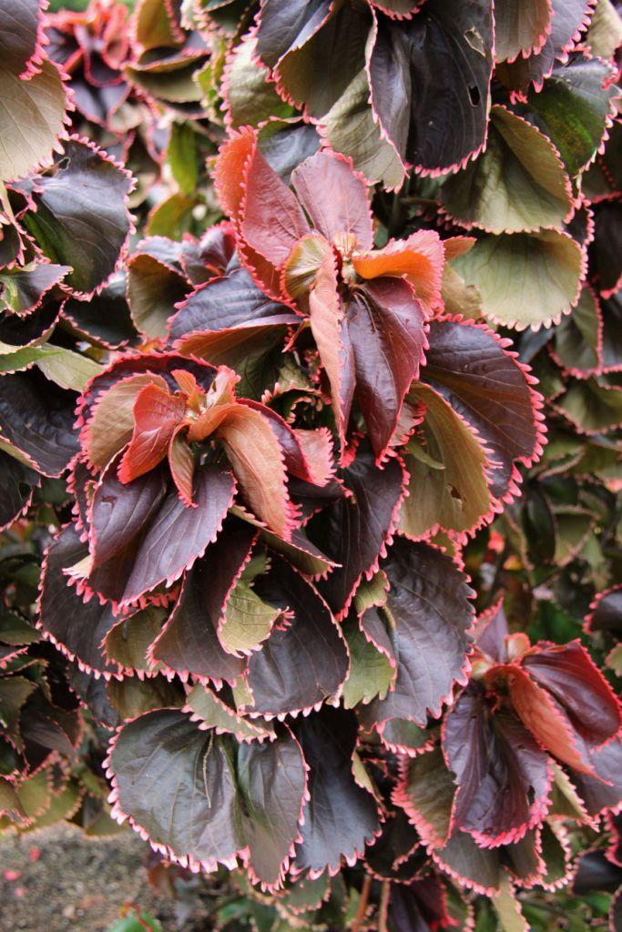 botanical-garden-87