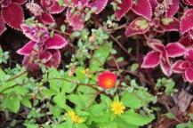 glover-garden-7