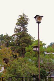 itsukushima-shrine-37