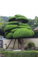 kannawa-umi-jigoku-1