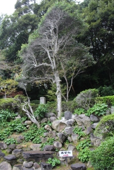 kannawa-umi-jigoku-27