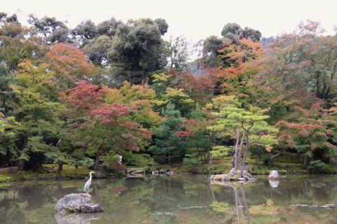 kinkaku-ji-temple-22