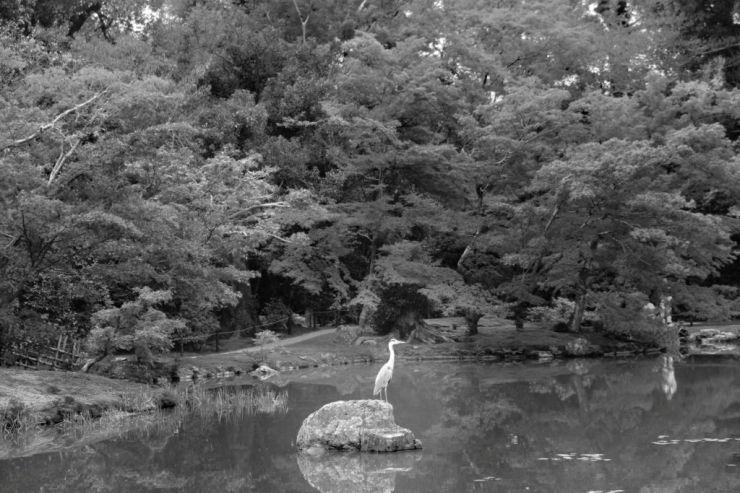 kinkaku-ji-temple-26