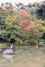 kinkaku-ji-temple-27