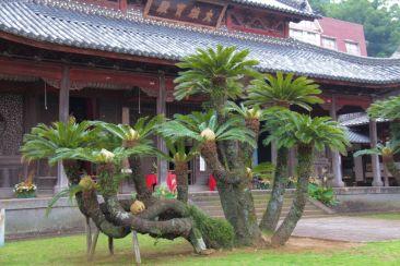 kofuku-ji-temple-2