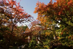 koko-en-garden-1