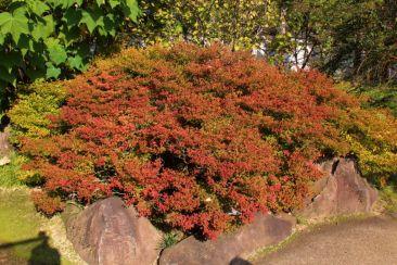 koko-en-garden-14