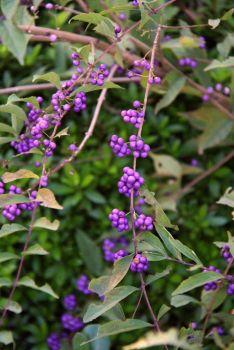 koko-en-garden-20