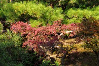 koko-en-garden-25