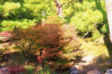 koko-en-garden-26