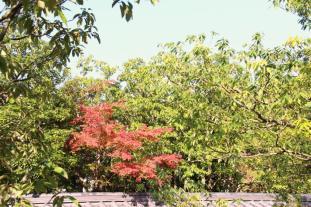 koko-en-garden-39