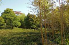 koko-en-garden-41
