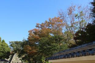 koko-en-garden-48